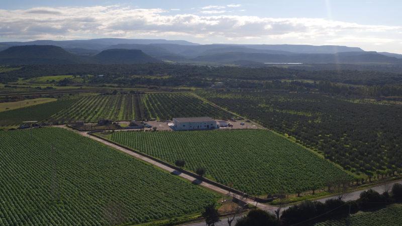 Azienda-agricola-Olio-Corax-Alghero-TotAlguer7